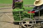 ขั้นตอนการจัดสวน การเตรียมพื้นที่ และการปูหญ้าสำหรับตกแต่งสวน