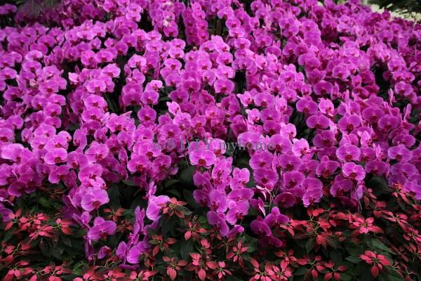 ดาษดา,จัดสวน,สวนดอกไม้
