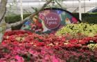 เที่ยวชมสวนดอกไม้ที่ ดาษดา แกลลอรี่ ปราจีนบุรี