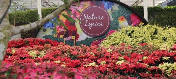 ดาษดา ปราจีนบุรี,จัดสวน,สวนดอกไม้