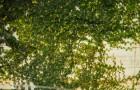 การจัดสวนแบบ Vertical Gardens (สวนแนวตั้ง)เพิ่มพื้นที่สีเขียวให้กับกำแพงบ้าน