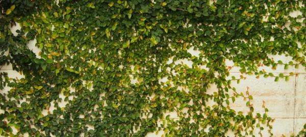 การจัดสวน,สวนแนวตั้ง,Vertical Gardens