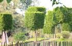 การตัดแต่งพรรณไม้หนึ่งในการดูแลรักษาและตกแต่งจัดสวน