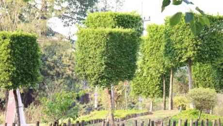 การจัดสวน,ตกแต่งสวน,ตัดแต่งพรรณไม้