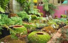 การจัดสวน การดูแลต้นไม้และการดูแลตกแต่งสวนในช่วงหน้าฝน