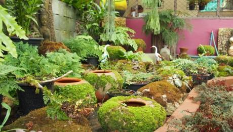ตกแต่งสวน,จัดสวนหน้าฝน,โอ่งมอสส์